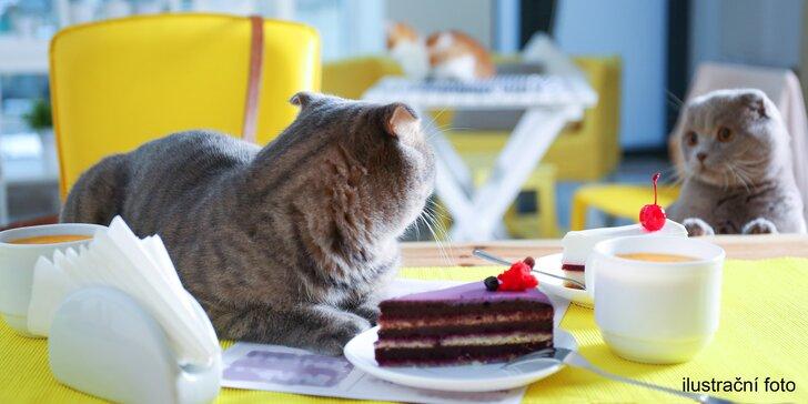Čaj ze šťávy z čerstvého ovoce a zimní dezert v kočičí kavárně