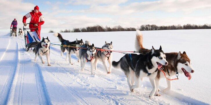 Zimní dobrodružství v Orlických horách: jízda na saních se psím spřežením