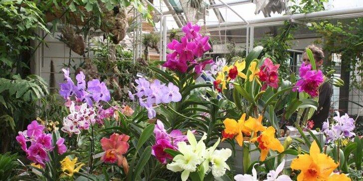 Výstava Svět orchidejí v Drážďanech a cesta vlakem nejen z Prahy