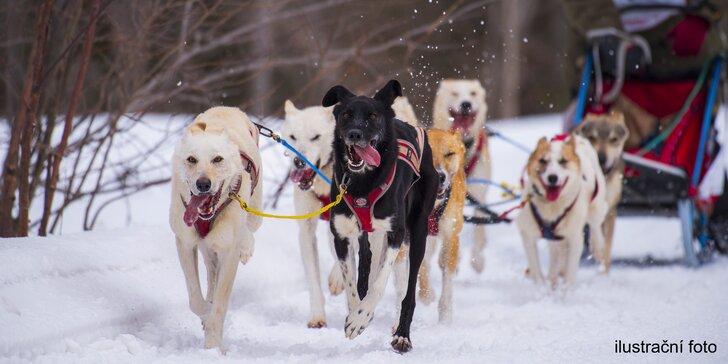 Jízdy se psím spřežením až pro 2 osoby včetně musherské školy řízení