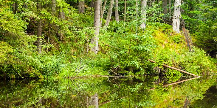Aktivní dovolená s polopenzí v rodinném penzionu pod Boubínským pralesem