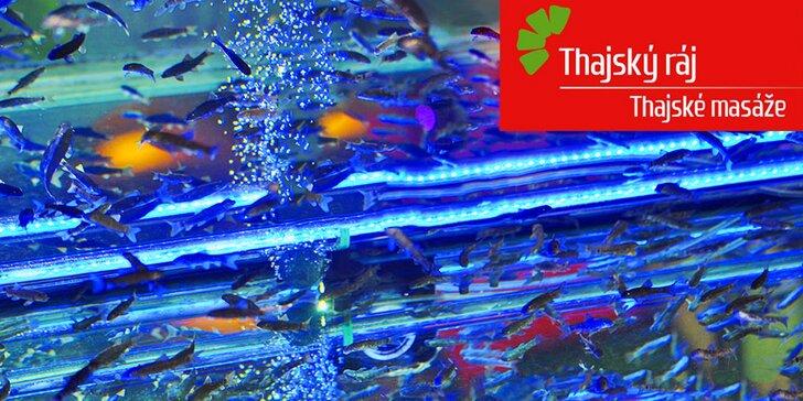 Originální pohlazení Thajska: Relaxace s rybičkami Garra Rufa ve všední dny