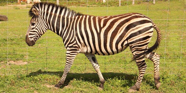 Exotická zvířata zblízka: rodinné a partnerské vstupy do Zooparku Stěžery