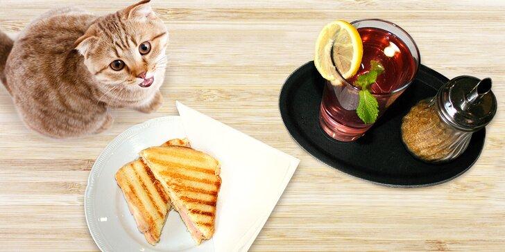 Výtečná svačinka v kočičí kavárně u Stodolní: domácí limonáda a toast pro 1 nebo 2