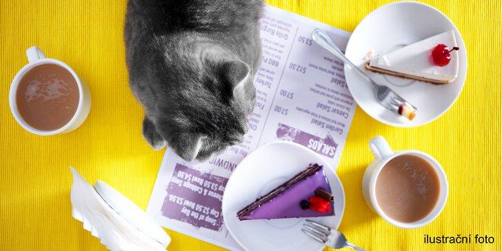 Domácí dort a teplý nápoj dle výběru pro 1 nebo pro 2 v kavárně plné koček