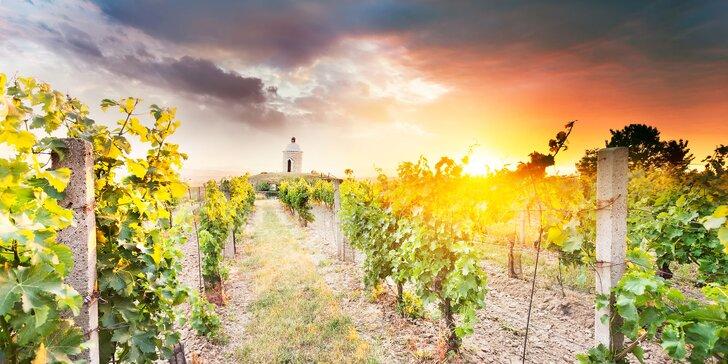 Kouzla Pálavy mezi vinicemi: pobyt s chutným jídlem, bazénem i vínem