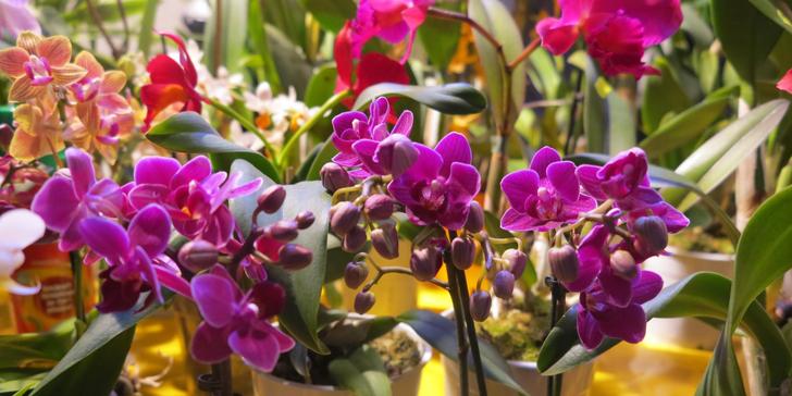 Největší výstava orchidejí v Evropě, prohlídka centra Drážďan, Primark