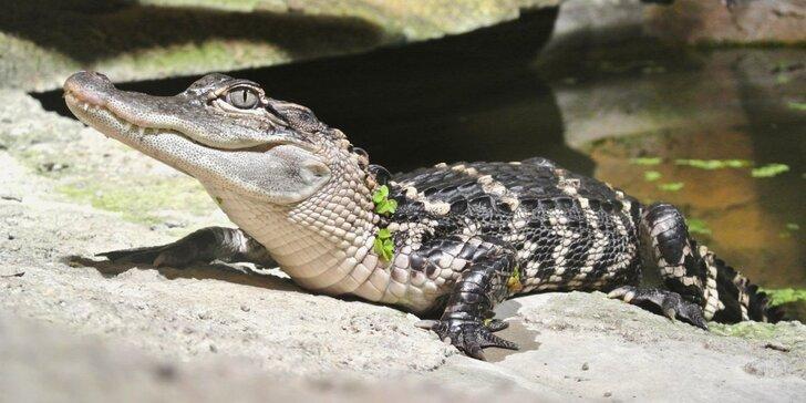 Zoo Terárium: Plazi všech druhů, opičky i kočkovité šelmy v pražské minizoo