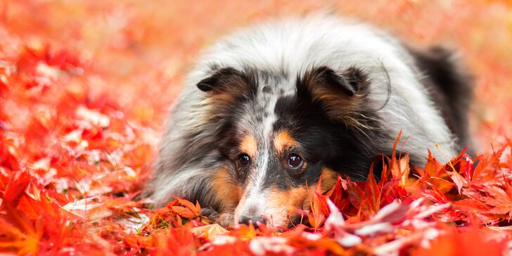 Fotografování psů v exteriéru: 15 upravených fotografií v ceně