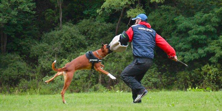 Úvodní hodina v DogUniversal: 60 minut výcviku psa jakéhokoliv plemene