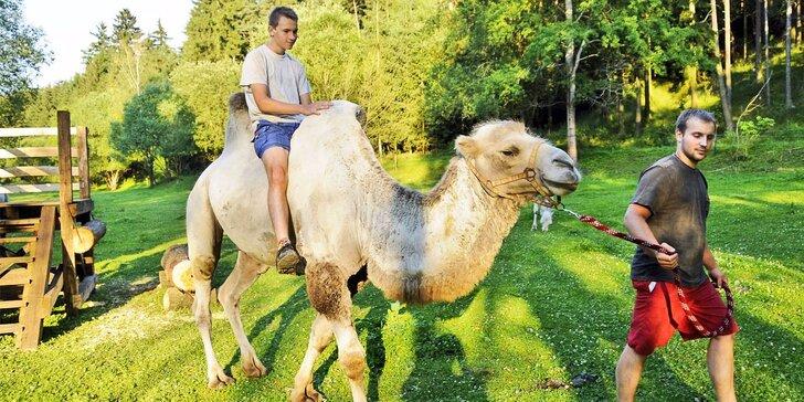 Exotika v Uhrovic mlýně: zážitková jízda na velbloudovi pro malé i velké