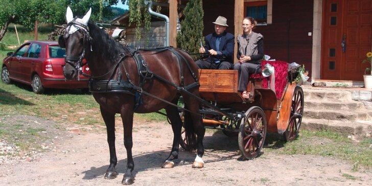 Zážitek pro celou rodinu: jízda kočárem taženém starokladrubským koněm