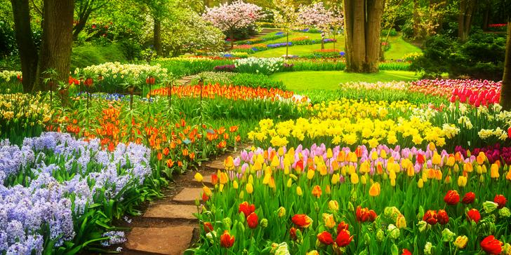 Květinový park Keukenhof, skanzen Zaanse Schans a Amsterdam za jeden den
