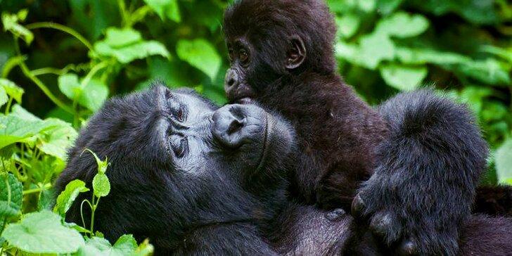 Wroclaw: za památkami i za zvířátky do nejstarší Zoo s moderním afrikáriem