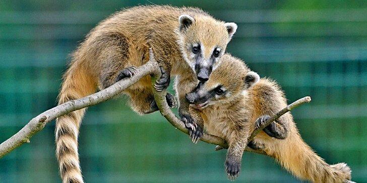 Společné chvíle mezi zvířátky: vstup do Zoo Tábor pro dospělé, děti i rodiny