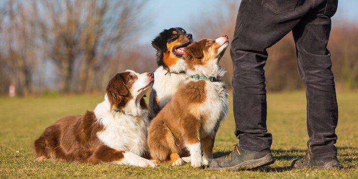Kurz psí poslušnosti: 60 minut na zkoušku nebo 10 hodinových lekcí