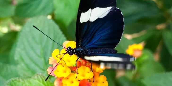 Vstupenka do motýlí zahrady v Liptovském Mikuláši