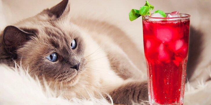 Ledové osvěžení a domácí dezert v kočičí kavárně i pro dva
