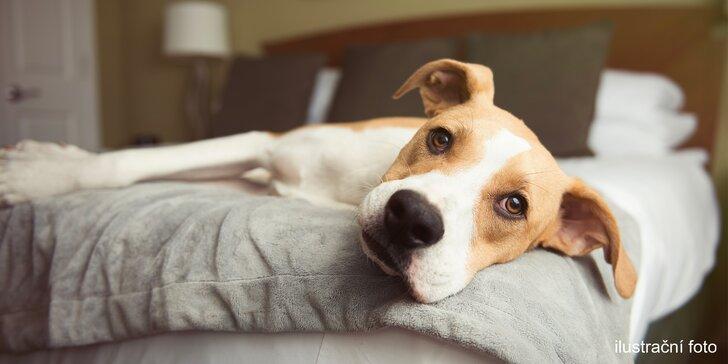Pet Center: Pobyt v Psím hotelu na 1 nebo 3 noci pro malá i větší plemena psů