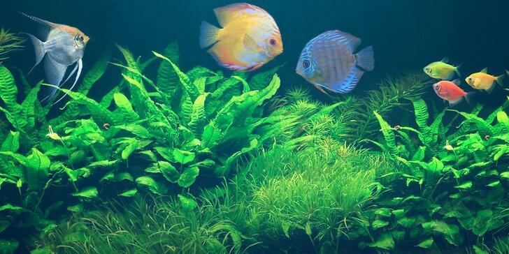 Vstupné na největší výstavní a prodejní akvaristickou burzu Ryby a rybičky