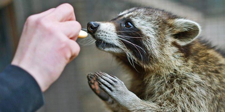 Komentovaná prohlídka zookoutku Chuchle i s krmením zvířat