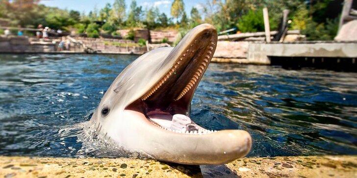 Výlet do Norimberku: místní zoo s delfináriem a možnost prohlídky města