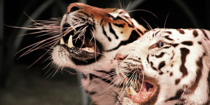 Užijte si pořádnou show cirkusu Bernes: 17 termínů v Řepích
