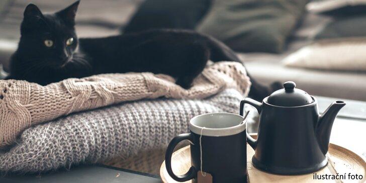 Čaj ze šťávy z čerstvého ovoce a lahodný koláč v kočičí kavárně