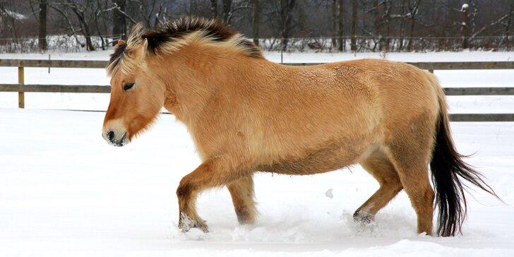 Vánoční vyjížďky na koních: jízdárna pečující o nechtěná a nemocná zvířata