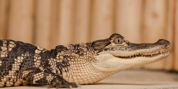 Vstupenka pro dospělého do Krokodýlí Zoo Praha aneb Vodní plazi naživo