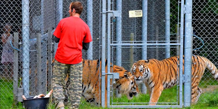 Staňte se ošetřovatelem v ZOO Tábor: 5hodinový zážitek pro milovníky zvířat