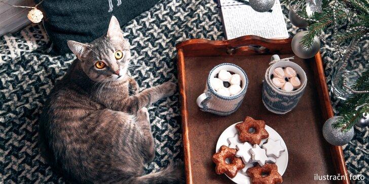 V milé společnosti: káva a slaďoučký dezert v kočičí kavárně