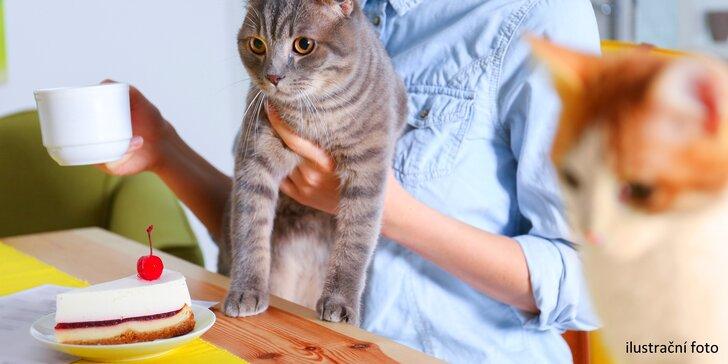 Otevřený voucher do kočičí kavárny na veškerý sortiment: 300 nebo 500 Kč