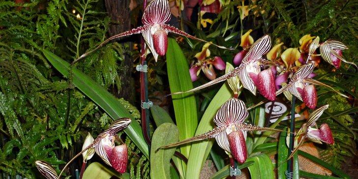 Výlet na prodejní výstavu orchidejí Orchideen Welt a prohlídka Drážďan