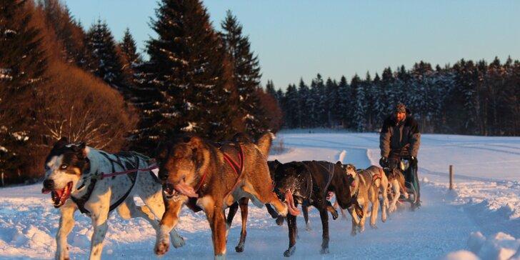 Nezapomenutelný zážitek: projížďka se psím spřežením na saních či káře