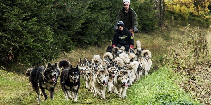 Hodinová jízda se psím spřežením v krásných Jestřebích horách