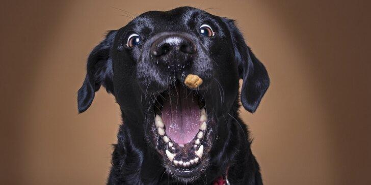 Profesionální ateliérové focení vašeho psího kamaráda