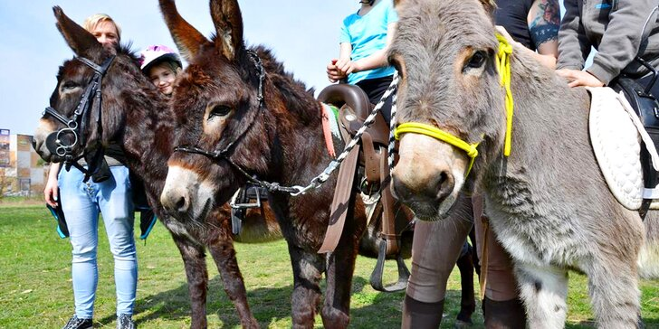 S dětmi na oslí trek: rodinná vyjížďka s oslíky po přírodním parku Orlice