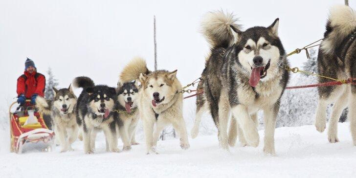 Hodinová jízda se psím spřežením v krásném Podkrkonoší