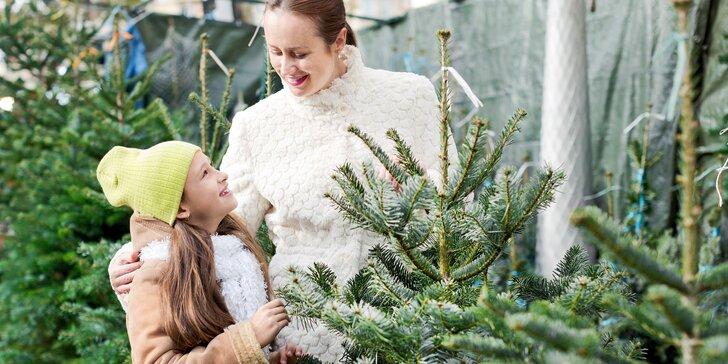 Voňavý symbol Vánoc: až 225 cm vysoká živá jedle ve špičkové kvalitě