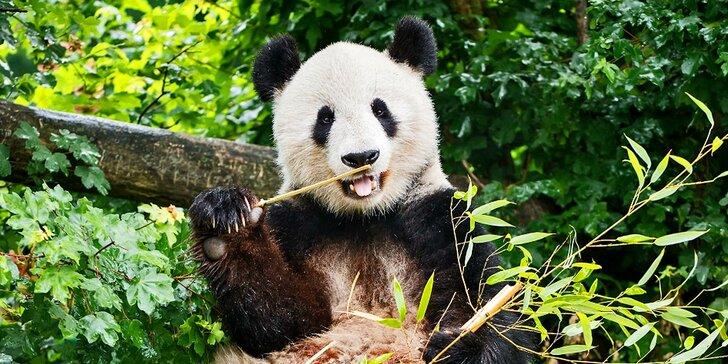 Vídeňská zoo: lední medvědi, orangutani, pandy, koaly a mnoho dalších