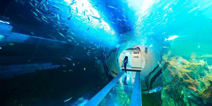 1denní výlet do Vídně za atrakcemi, zábavou a největším rakouským akváriem