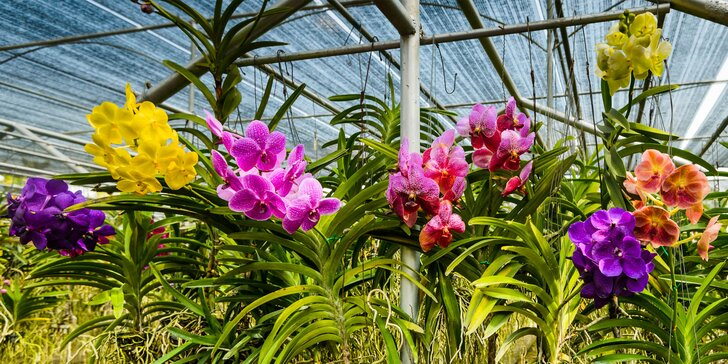 Dostaveníčko v botanické zahradě v Teplicích: vstup pro 2 osoby