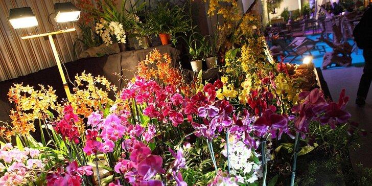 Drážďany: výstava orchidejí a prohlídka města nebo možnost nákupů