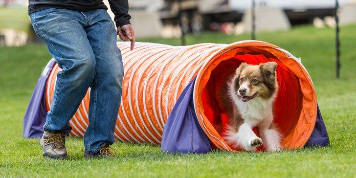 Společné chvíle vás sblíží: aktivní zábava se psím miláčkem na cvičáku