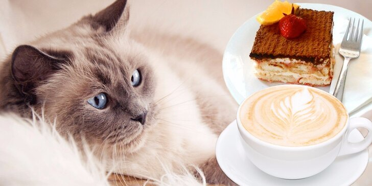 Káva nebo čaj, domácí dezert a prima společnost v kočičí kavárně pro 1 či 2