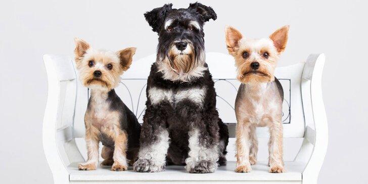 To nejlepší pro psí miláčky: wellness nebo kompletní péče vč. úpravy drápků