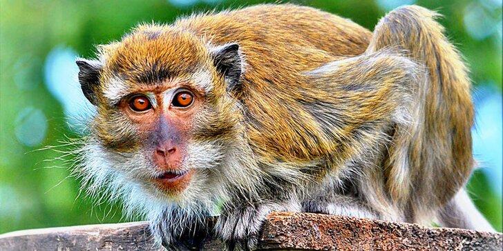 Zvířátka od ar po zubry: vstupné do táborské zoo pro dospělé, děti i rodiny