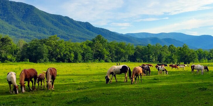 Relax v Nízkých Tatrách: ranč s privátním wellness a možností jízdy na koni