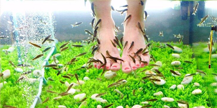 Báječná lázeň nohou: rybky Garra rufa včetně pedikúry či masáže dle výběru